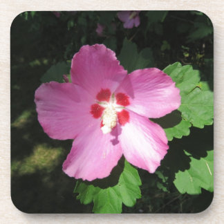 Rosa rosado bonito de la flor de Sharon Posavasos De Bebida