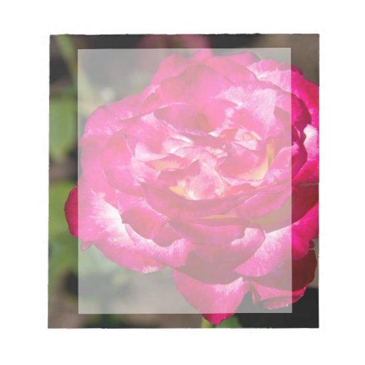 Rosa rosado y blanco magenta libretas para notas