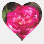 Rosa rosado y blanco magenta pegatina en forma de corazón