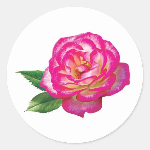 Rosa rosado y blanco pegatina redonda