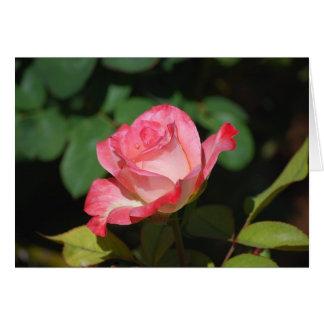 Rosa rosado y blanco tarjeta de felicitación