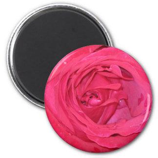 Rosa rosae magnet