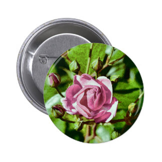 Rosa Rose, Nature Pinback Button