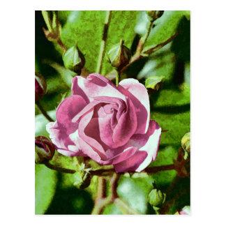 Rosa Rose, Nature Postcard
