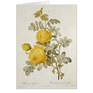 Rosa Sulfurea  from 'Les Roses' Card