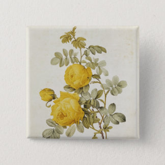 Rosa Sulfurea  from 'Les Roses' Pinback Button