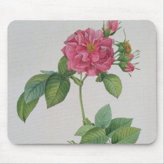 Rosa Turbinata, from ,Les Roses', Vol 1, 1817 Mouse Pad