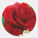 Rosa vermelha adesivos em formato redondos