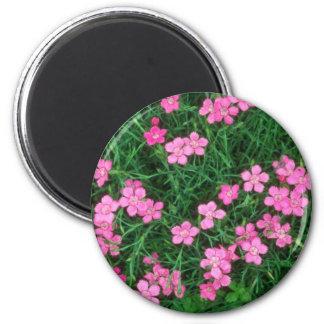 Rosa virginal rosado, (clavel Deltoides) flores Imanes De Nevera
