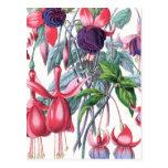 Rosa y flores fucsias colgantes púrpuras postal