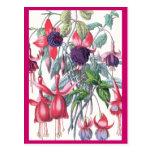 Rosa y flores fucsias colgantes púrpuras tarjeta postal