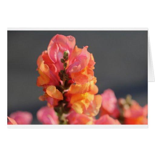 Rosa y flores tropicales anaranjadas tarjeta
