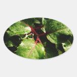 Rosa y lluvia y verde colcomanias ovaladas