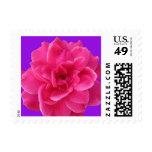 Rosa y pequeño púrpura sellos