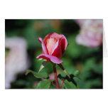 Rosa y tarjeta subió melocotón