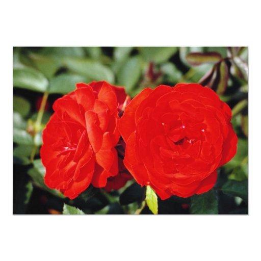 """Rosaleda del parque de Westbroek, flores de Invitación 5"""" X 7"""""""