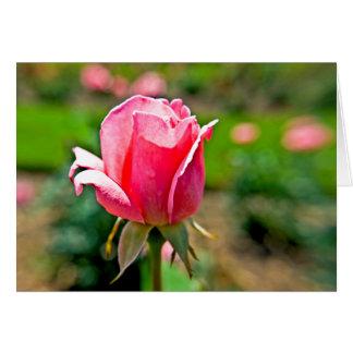 Rosaleda rosada