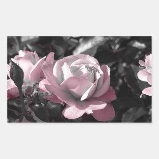 Rosaleda rosada pegatina rectangular