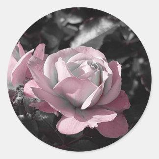 Rosaleda rosada pegatina redonda