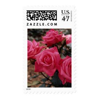 Rosas 2 292 1 sellos