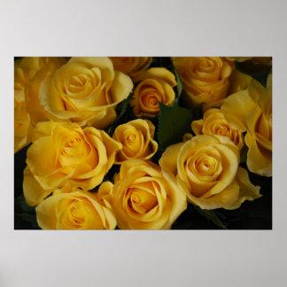 Rosas amarillos posters