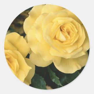 Rosas amarillos pegatina redonda