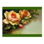 Rosas amarillos postales