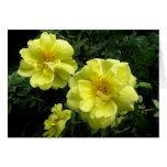 Rosas amarillos tarjeta de felicitación