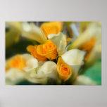Rosas amarillos y poster de las calas