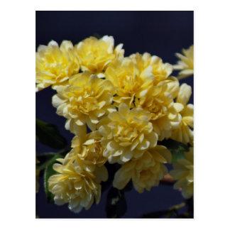 Rosas amarillos y significado tarjeta postal