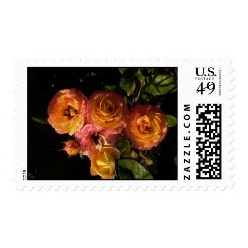 rosas anaranjados con rocío franqueo