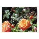Rosas anaranjados felicitaciones