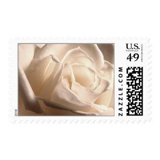 Rosas Blancas boda Sello Postal Postage Stamp