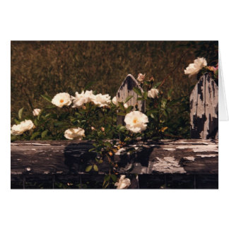 Rosas blancos en una cerca tarjeta pequeña