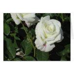 Rosas blancos felicitaciones