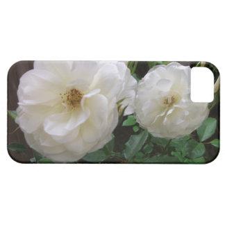 Rosas blancos florecientes iPhone 5 fundas