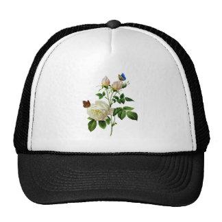 Rosas blancos hermosos besados por las mariposas gorras