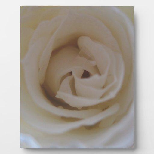 Rosas blancos placas