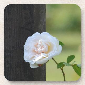 Rosas blancos románticos posavasos de bebidas