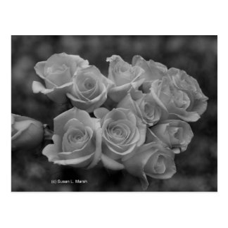 Rosas blancos y negros contra fondo manchado tarjetas postales