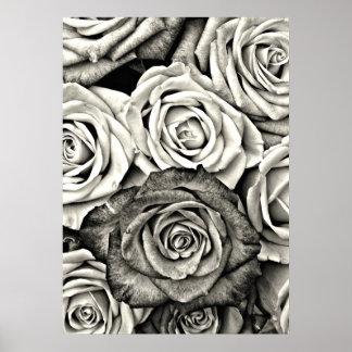 Rosas blancos y negros póster