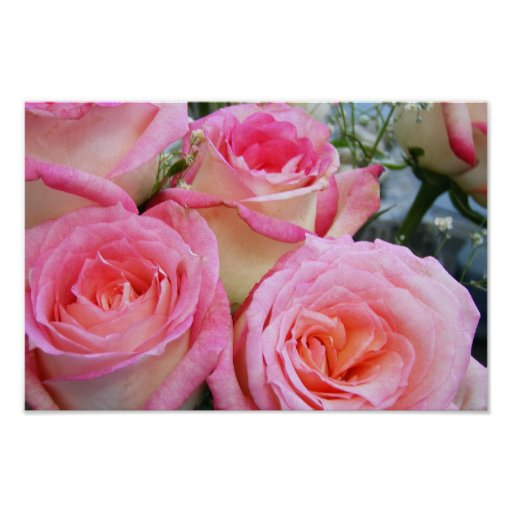 Rosas bonitos póster