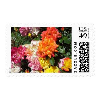 Rosas coloridos sellos postales