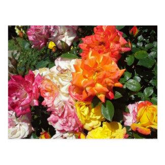 Rosas coloridos tarjetas postales