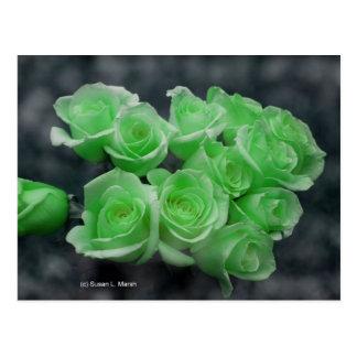 Rosas colorized verde del manojo tarjetas postales