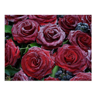 Rosas congelados tarjetas postales