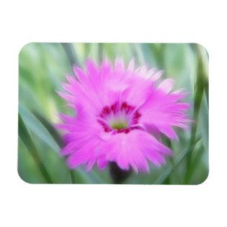 Rosas de cabaña - clavel rectangle magnet
