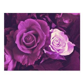 Rosas de color de malva en postal de la floración