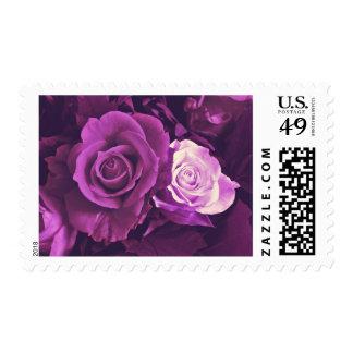 Rosas de color de malva en sellos de la floración