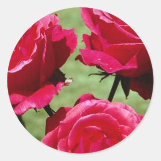 Rosas de color rosa oscuro pegatina redonda